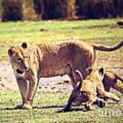 Small Lion Cubs With Mother. Tanzania Art Print