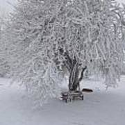 Snow And Ice Art Print