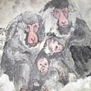 Snow Monkey Snow Leopard Album Art Print