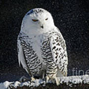 Snowy Owl On A Twilight Winter Night Art Print