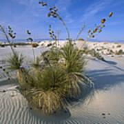 Soaptree Yucca In Gypsum Dunes White Art Print