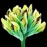 Suckling Clover (trifolium Dubium), Sem Art Print