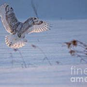 Sunlit Wings Art Print