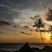 Sunset And Palm Tree Art Print