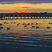 Sunset Geese Art Print