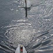 2 Swan Art Print