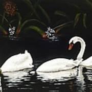 Swans IIi Art Print