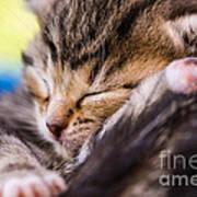 Sweet Small Kitten  Art Print