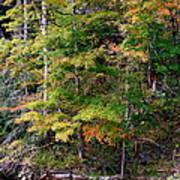 Tennessee Autumn Stream Art Print