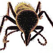 Termite Soldier Art Print