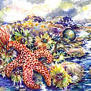 Tidal Pool I Art Print by Ann  Nicholson