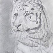 Tiger Watching Art Print