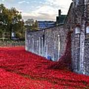Tower Of London Poppies Art Print