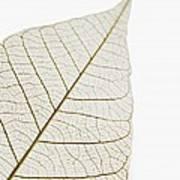 Transparent Leaf Art Print