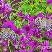 2 Tree Nymph Butterflies Art Print