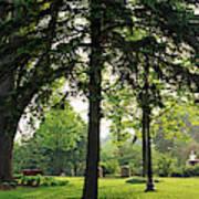 Trees In A Park, Adams Park, Wheaton Art Print