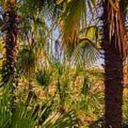 Tropical Forest Palm Trees In Sunlight Art Print