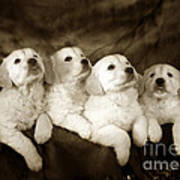 Vintage Festive Puppies Art Print