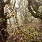 Virgin Mountain Rainforest Of Marlborough Nz Art Print
