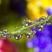 Water Drops On A Flower Stem Art Print