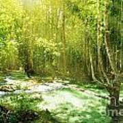 Waterfall In Rainforest Art Print