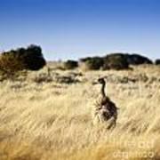 Wild Emu Print by Tim Hester