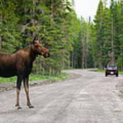 Wild Moose Art Print