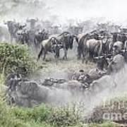 Wildebeest Migration 1 Art Print