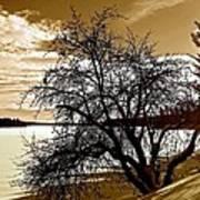 Willow On Silver Lake Art Print