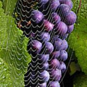 Wine In A Web Art Print