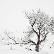 Winter Sage Art Print