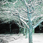 Winter Trees Print by Guy Ricketts