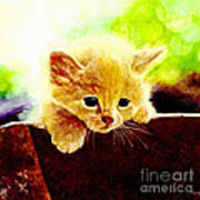 Yellow Kitten Art Print
