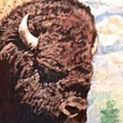 Young Bull At Yellowstone Art Print