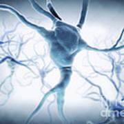 Neurons Art Print