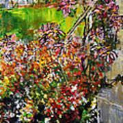 2012 119 Daisies Butterfly Garden United States Botanic Garden Washington Dc Art Print