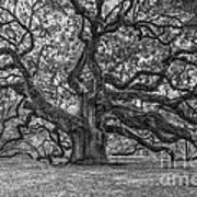 Angel Oak Tree In Black And White Art Print
