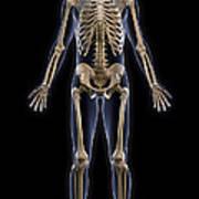 The Skeleton Art Print