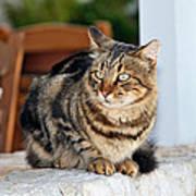 Cat In Hydra Island Art Print