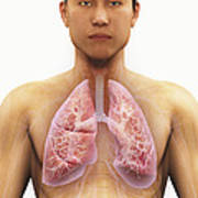 The Respiratory System Art Print