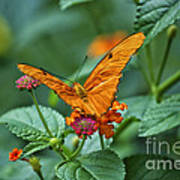 3 2 1 Prepare For Butterfly Liftoff Art Print