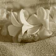 Aloha'lani Pua Melia Lei Manakai Art Print