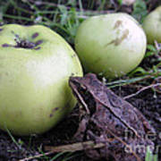 3 Apples And A Frog Art Print