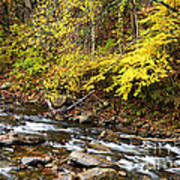 Autumn Elk River Art Print
