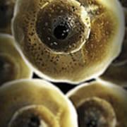 B Cells Art Print