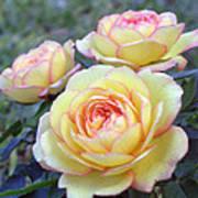 3 Beautiful Yellow Roses Art Print by Jo Ann