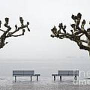 Benches And Trees Art Print