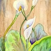3 Calla Lilies Art Print