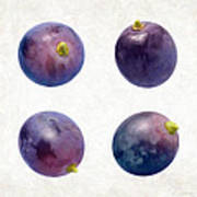 Concord Grapes Art Print by Danny Smythe