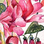 Cyclamen Art Print by Mindy Newman